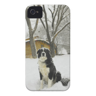 Dog sitting in snow with log cabin behind iPhone 4 cover