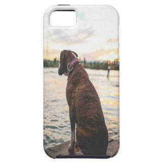 Dog Sitting on a Dock iPhone SE/5/5s Case