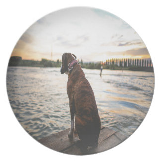 Dog Sitting on a Dock Plates