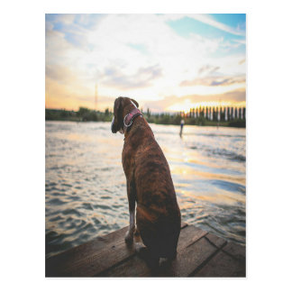 Dog Sitting on a Dock Postcard