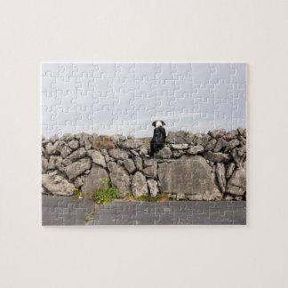 Dog sitting on a traditional Irish stone wall on Jigsaw Puzzle