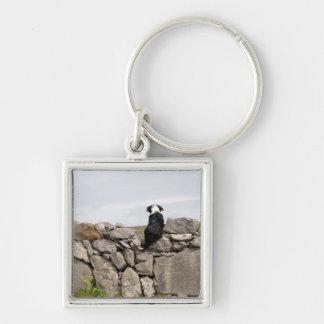Dog sitting on a traditional Irish stone wall on Keychain