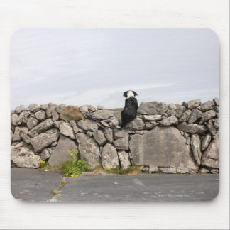 Dog sitting on a traditional Irish stone wall on Mouse Pad