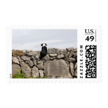 Dog sitting on a traditional Irish stone wall on Postage