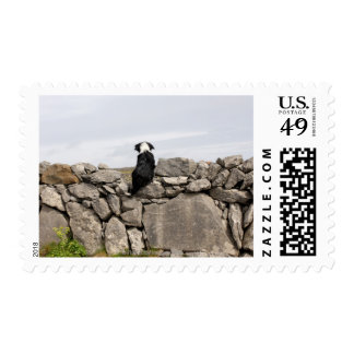 Dog sitting on a traditional Irish stone wall on Postage Stamp