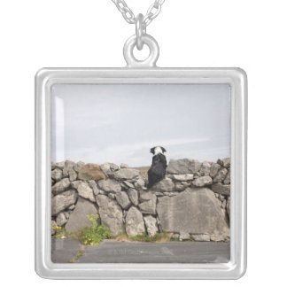 Dog sitting on a traditional Irish stone wall on Silver Plated Necklace