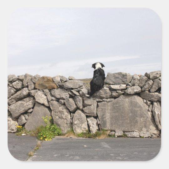 Dog sitting on a traditional Irish stone wall on Square Sticker