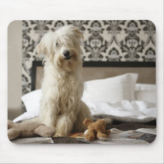 Dog sitting on bed with soft toys and newspaper mouse pad