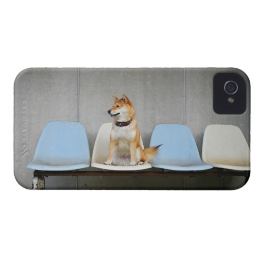 Dog sitting on bench iPhone 4 case