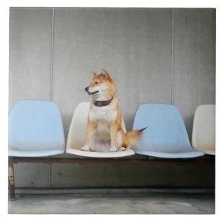 Dog sitting on bench tile
