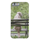 Dog sitting on park bench barely there iPhone 6 case