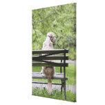 Dog sitting on park bench canvas print