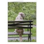 Dog sitting on park bench cards