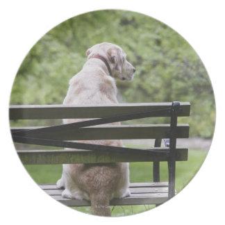 Dog sitting on park bench plates