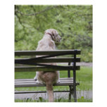 Dog sitting on park bench poster