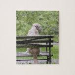 Dog sitting on park bench puzzle