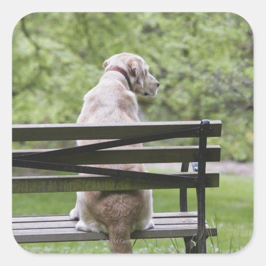 Dog sitting on park bench square sticker