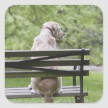 Dog sitting on park bench square stickers
