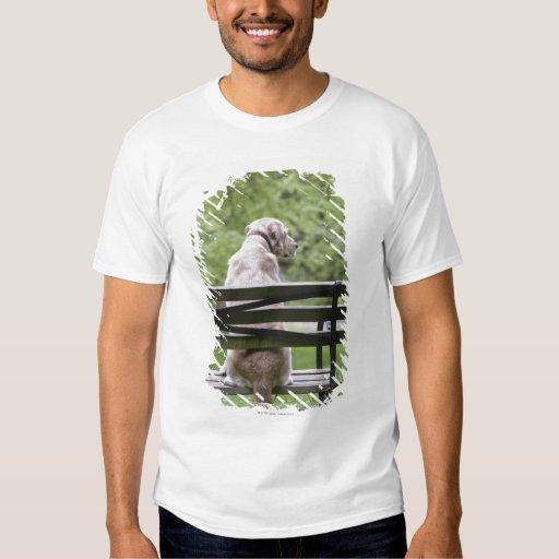 Dog sitting on park bench T-Shirt