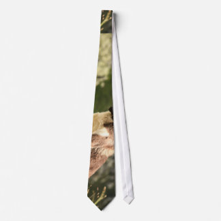 Dog sitting on slope of a hill tie