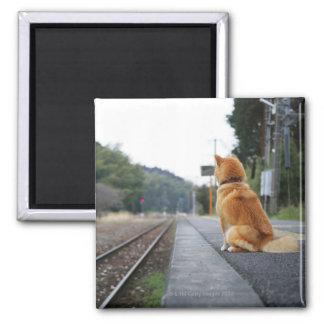 Dog sitting on train station magnet