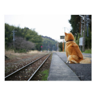 Dog sitting on train station postcard