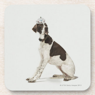 Dog sitting with a tiara on head coaster