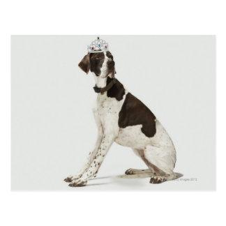 Dog sitting with a tiara on head postcard