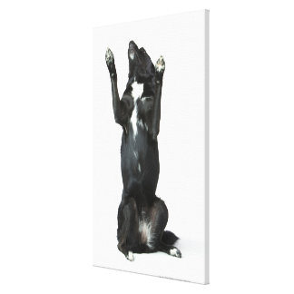 Dog sitting with paws up canvas print