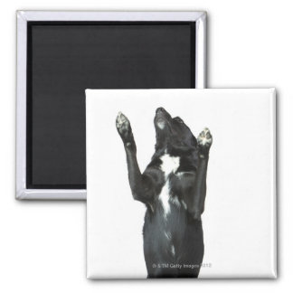 Dog sitting with paws up magnet