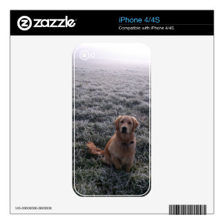 dog skin for the iPhone 4