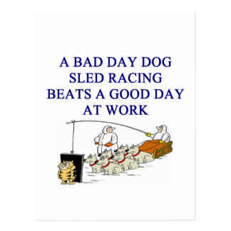 dog sled racing iditarod lover postcard