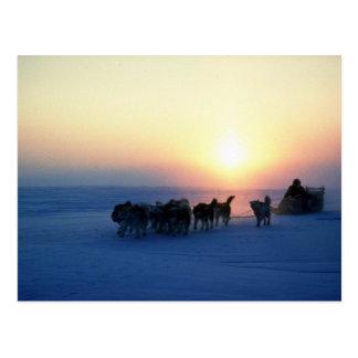 Dog sled travel at 45 degrees Celsius, Baffin Isla Postcards