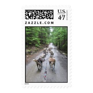 Dog Sledding Postage Stamp