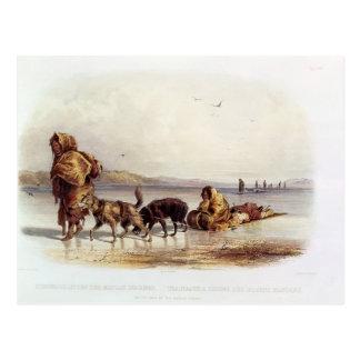 Dog Sledges of the Mandan Indians Postcard