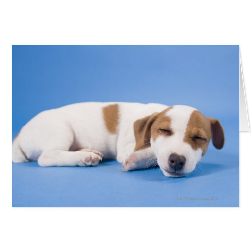 Dog sleeping cards