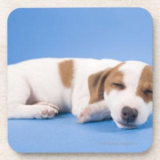 Dog sleeping drink coasters