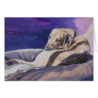 Dog Sleeping in Sun Notecard