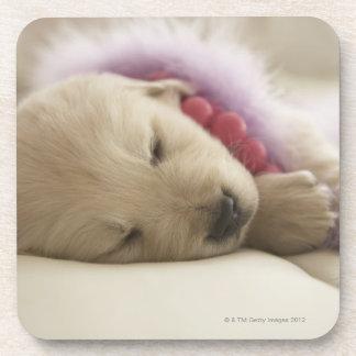 Dog sleeping on bed beverage coasters