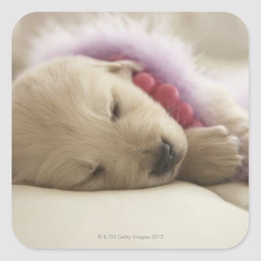 Dog sleeping on bed square sticker