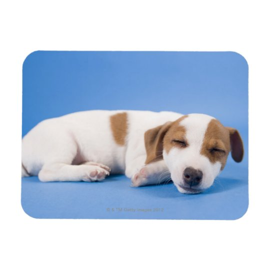 Dog sleeping rectangular photo magnet