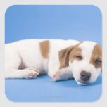 Dog sleeping square stickers