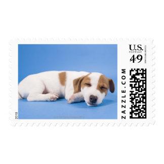 Dog sleeping stamp