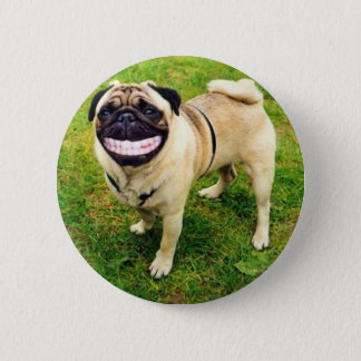 dog smile pug cute button