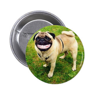 dog smile pug cute button