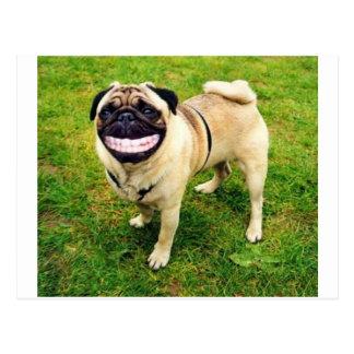 dog smile pug postcard