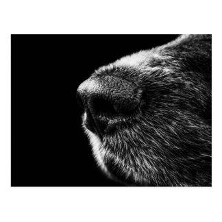 Dog Sniffer Postcard