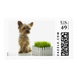 Dog sniffing neighbors yard postage
