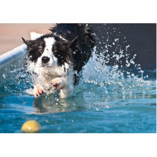 dog splashing in water photosculpture cutout