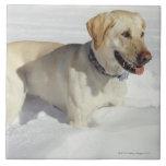 Dog standing in snow ceramic tiles
